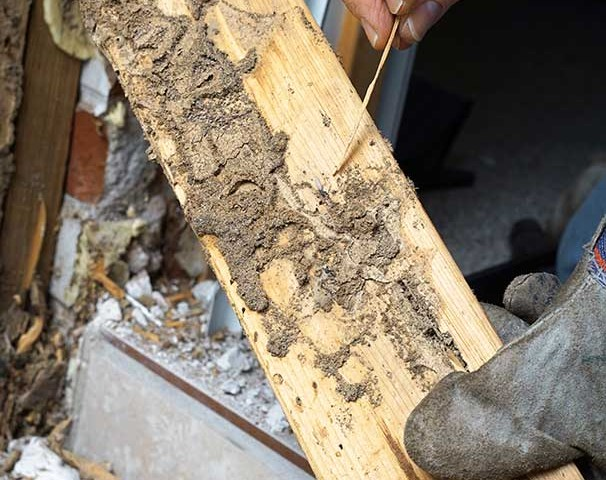 termite damage charleston sc