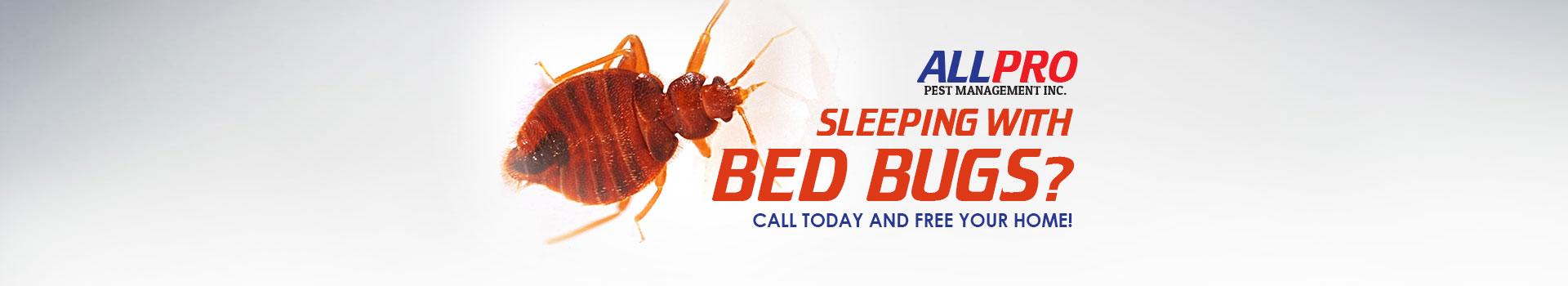 bed-bugs-slide