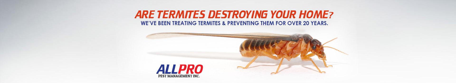 slide-home-bg-termites
