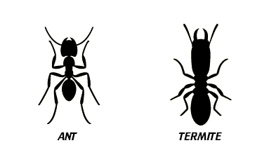 identifying ants versus termites charleston sc
