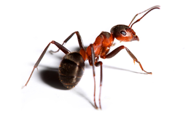 fire ant control charleston sc